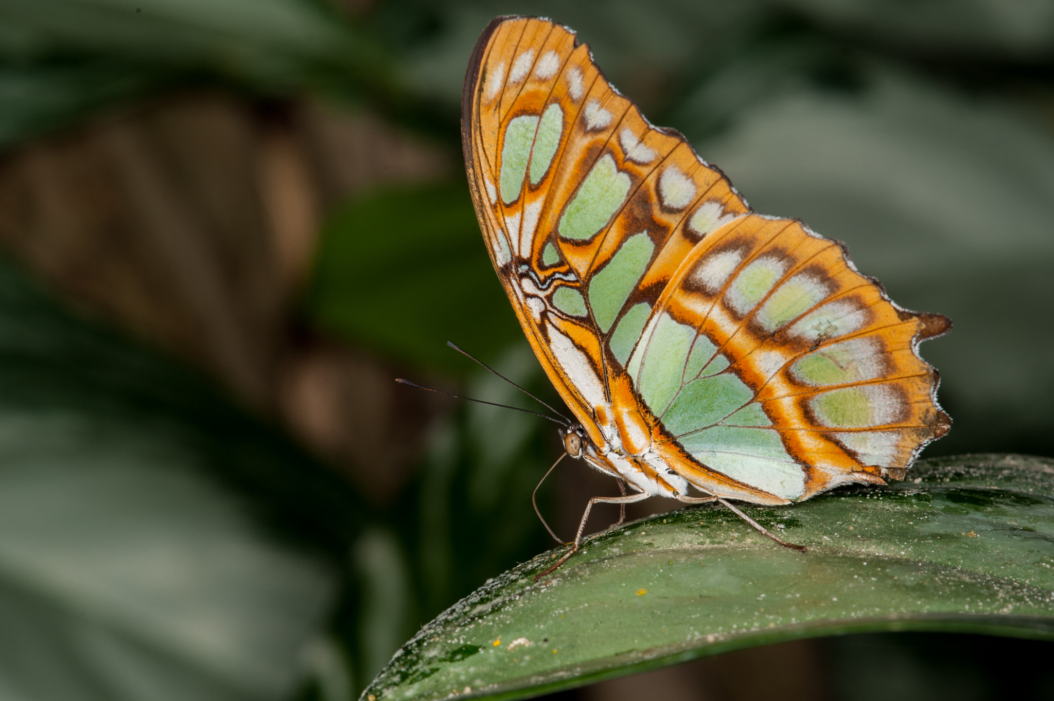 Photograph Butterfly by Peter Hausner Hansen on 500px