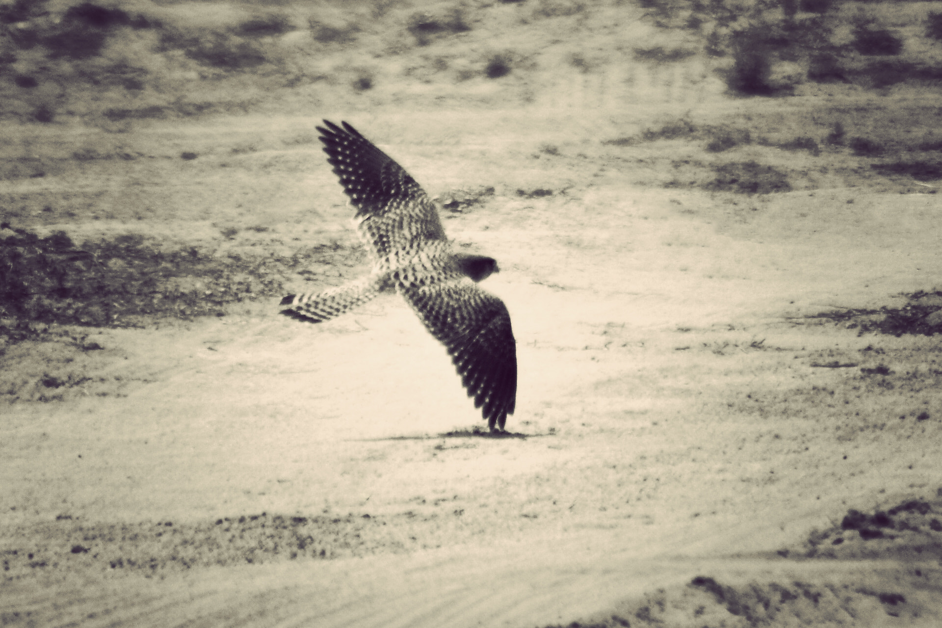 Photograph VERY LOW FLYING by Saud Alrshiad on 500px