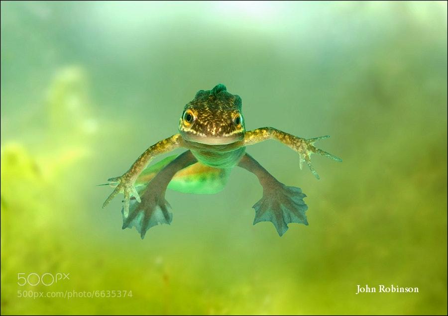 Photograph Alien ?? by John Robinson on 500px