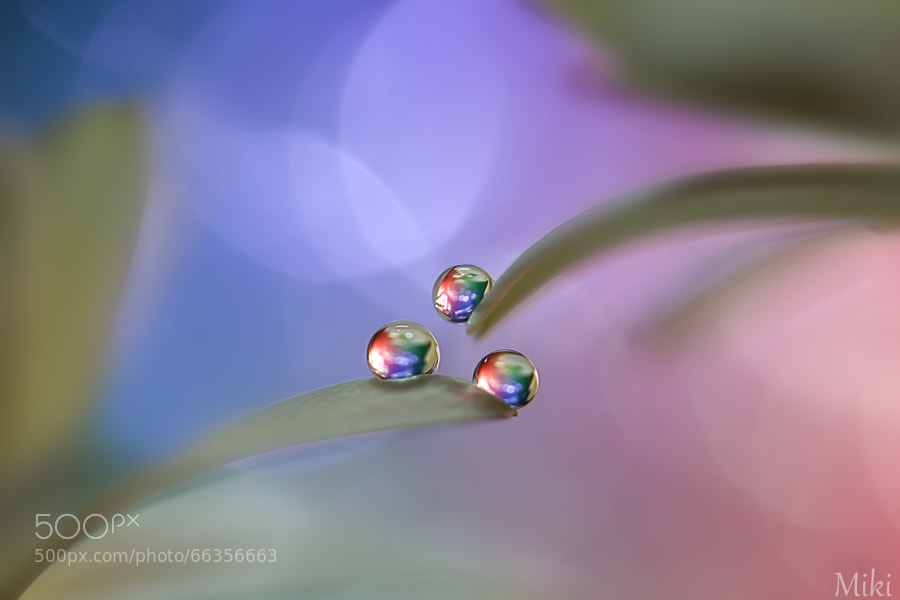 9 Breathtaking Macro Images By Photographer Miki Asai