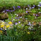 Spring Woodland Flowers