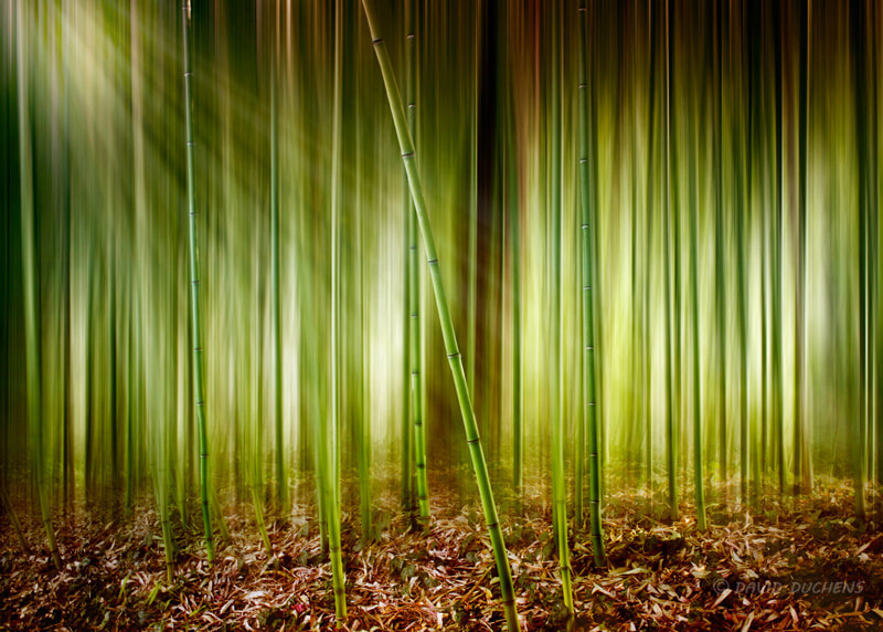 Photograph the enchanted forest by David Duchens on 500px