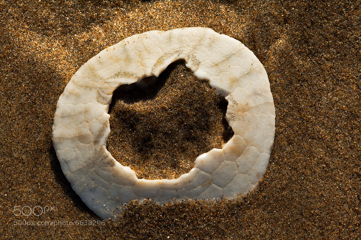 Photograph Sand Dollar by John Pedersen on 500px