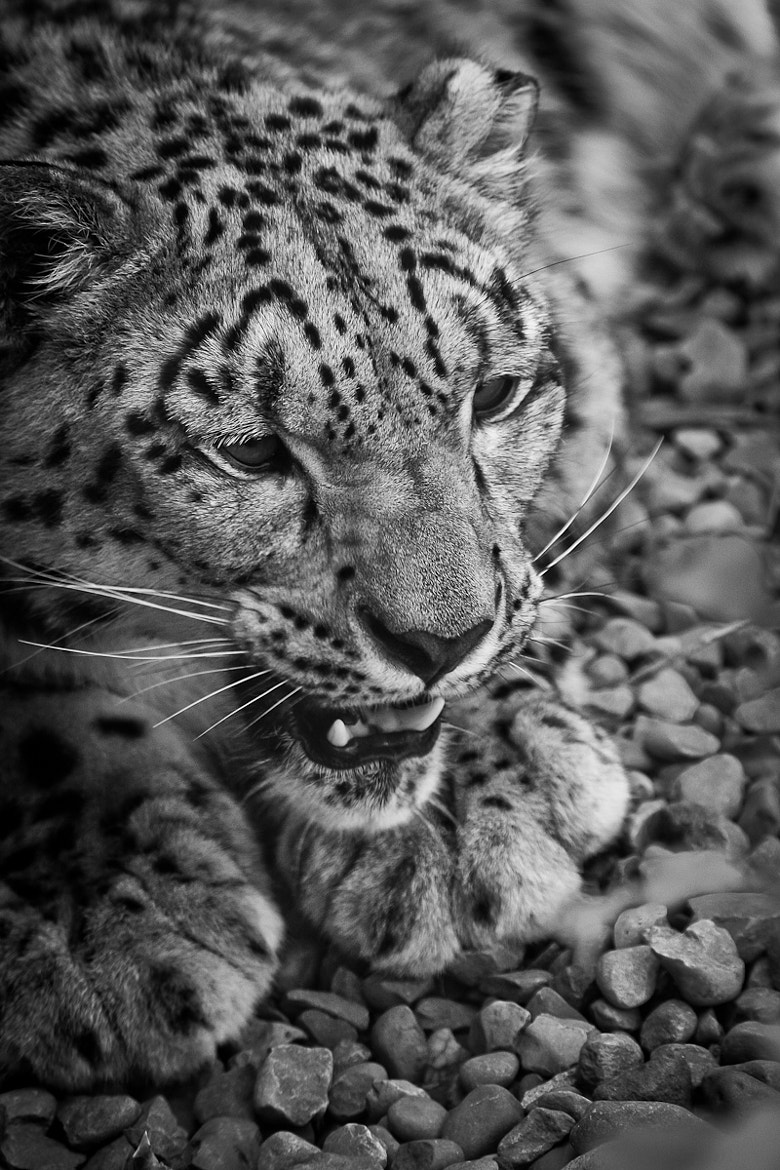 Photograph Don't mess with me by Philipp Wedel on 500px