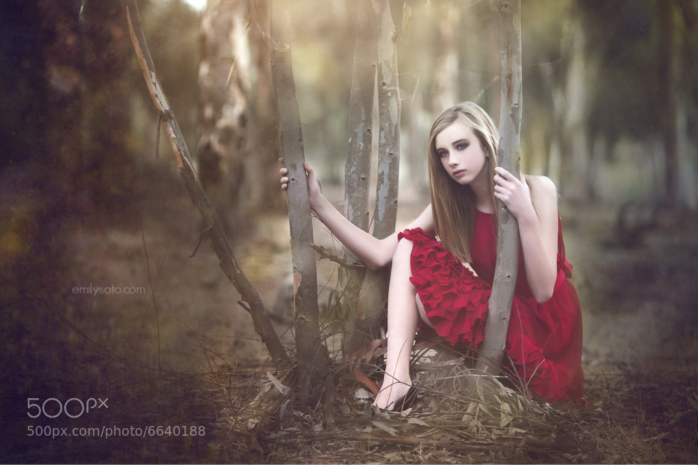 Photograph The Forests Rose by Emily  Soto on 500px