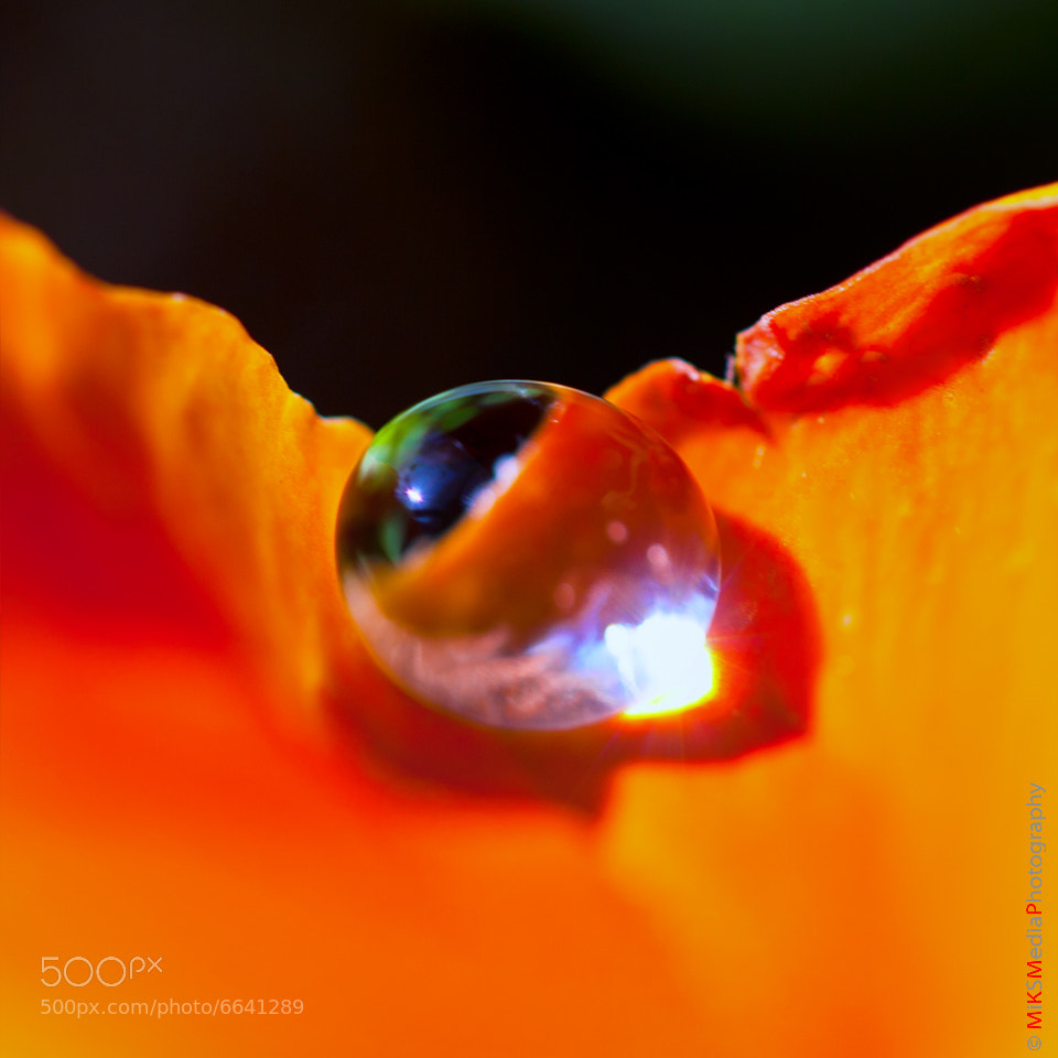 Photograph Sun in a drop by Kasia Sokulska on 500px