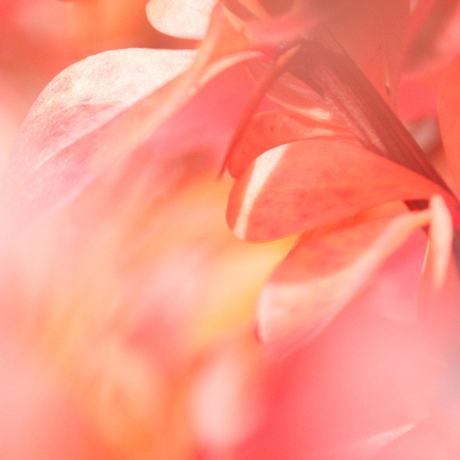 Pink V