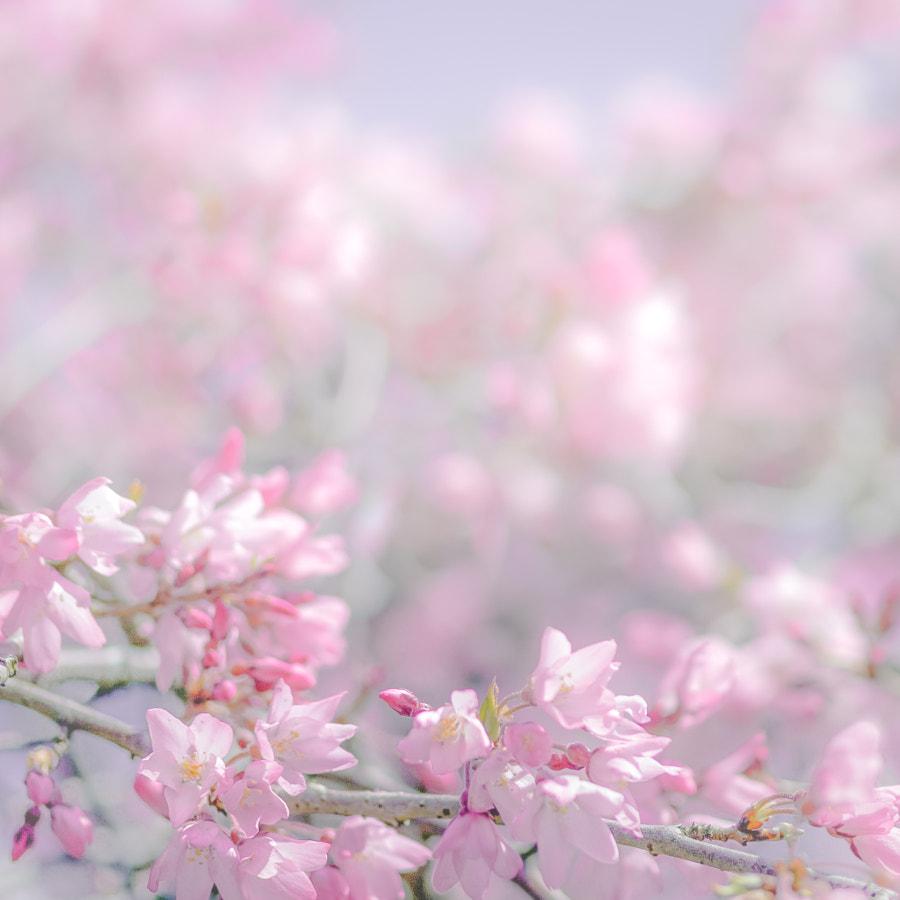 Pink VII