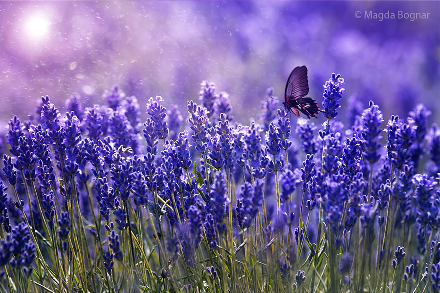 Blue Garden by Magda  Bognar on 500px.com