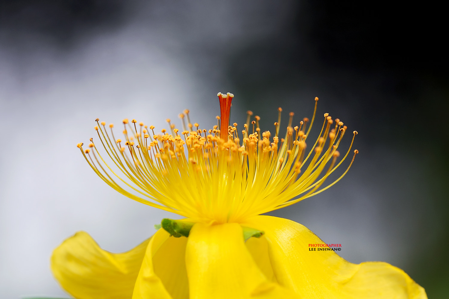 Photograph Dancing pistils by LEE INHWAN on 500px