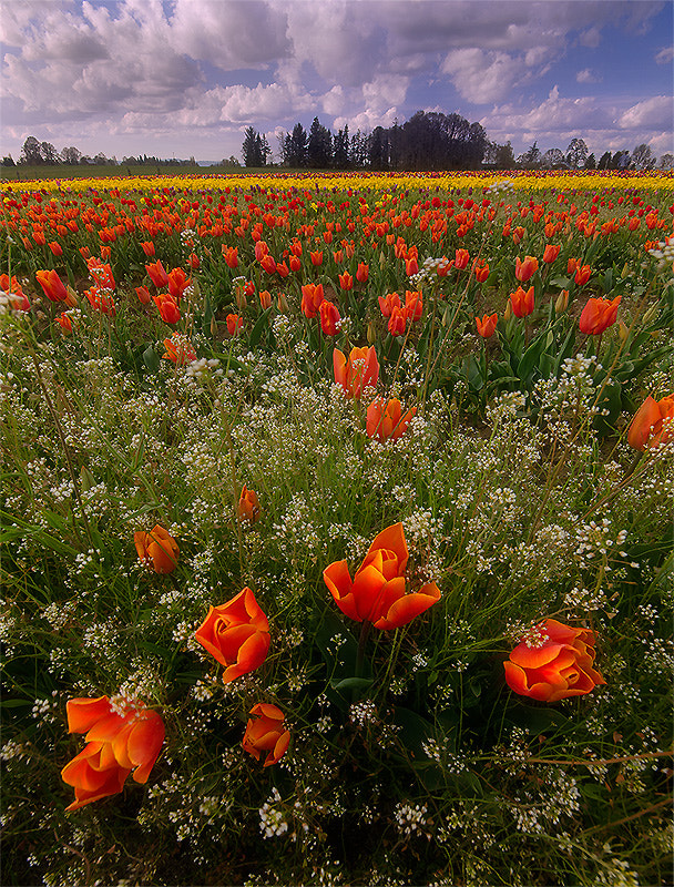 Photograph Spring Bouquet by Henrik Anker Bjerregaard  Lundh III on 500px