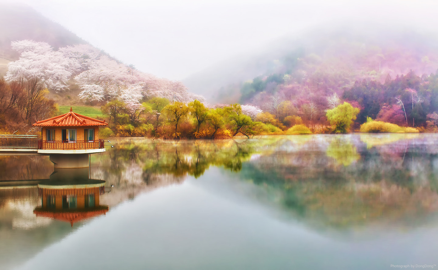 Photograph Misty Lake by SEO  on 500px