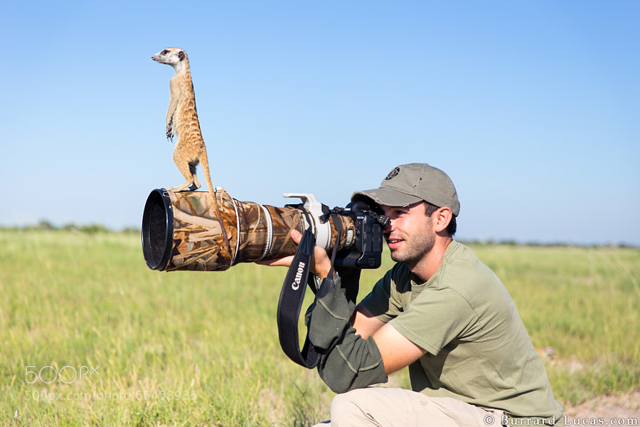 Photograph Meerkat by Will Burrard-Lucas on 500px