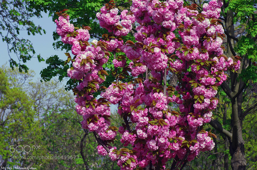 Photograph With the beauty of spring by Mehmet Çoban on 500px