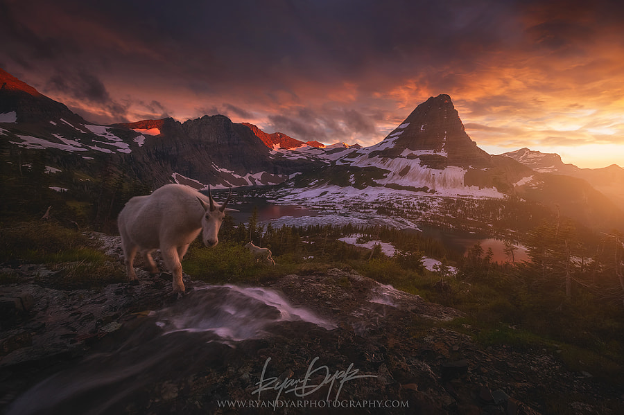Photograph Goat Crossing by Ryan Dyar on 500px