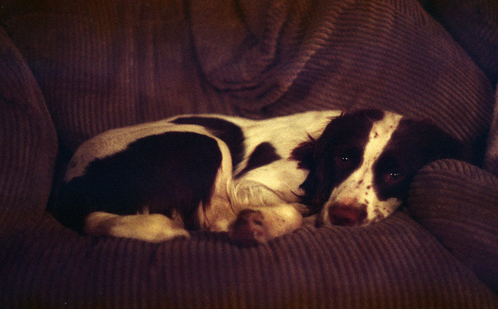 Photograph Cleo Naps by Harriet Knight on 500px