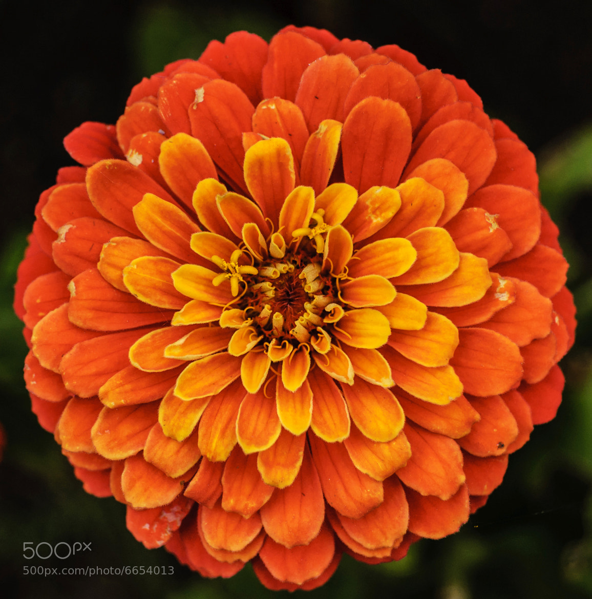 Photograph Flower by i500 ... on 500px