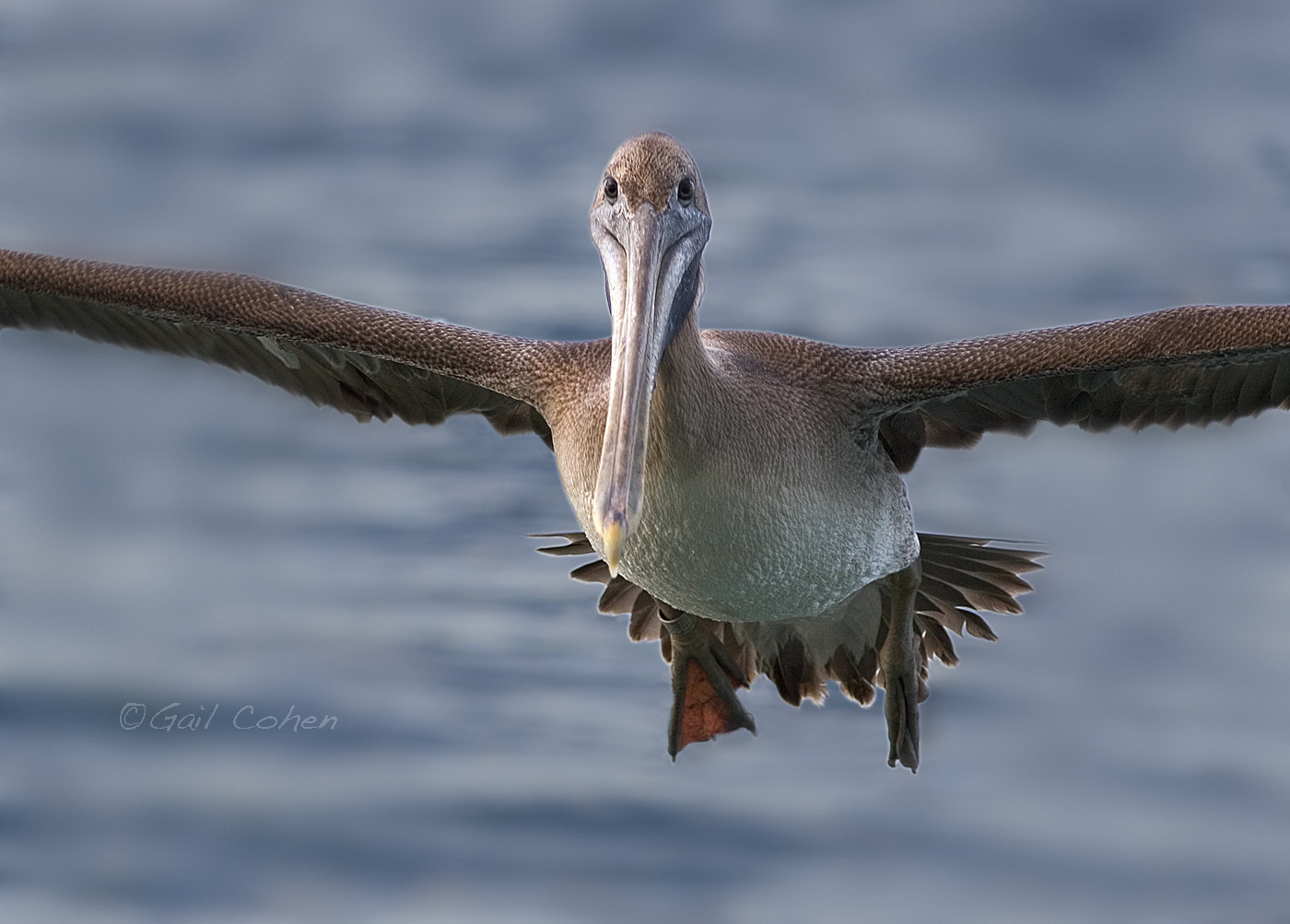 Photograph Landing Gear Down by Gail  Cohen on 500px