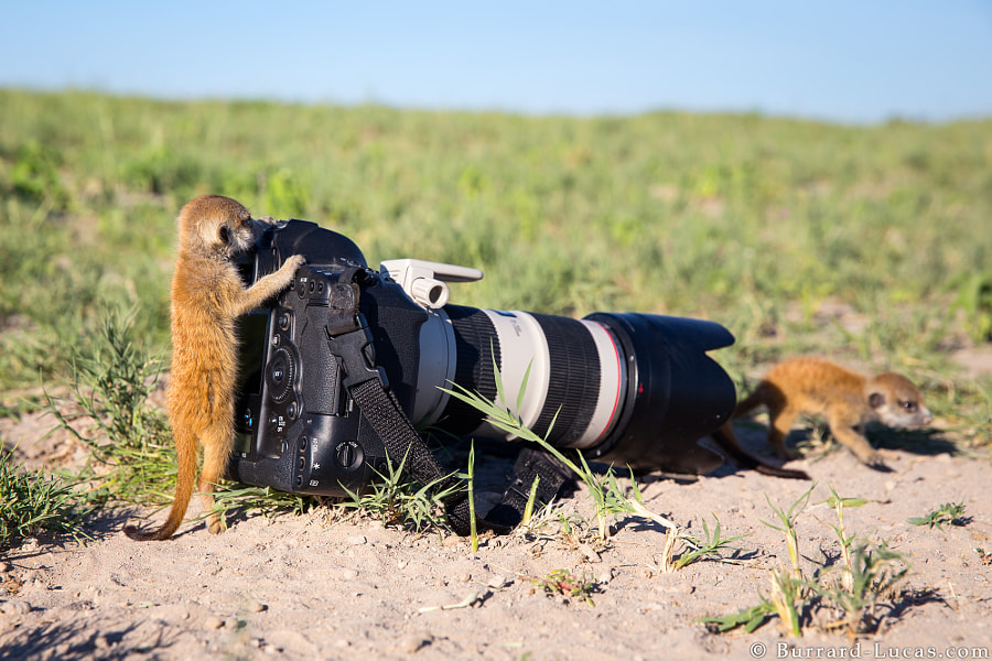 New Assistants by Will Burrard-Lucas on 500px.com