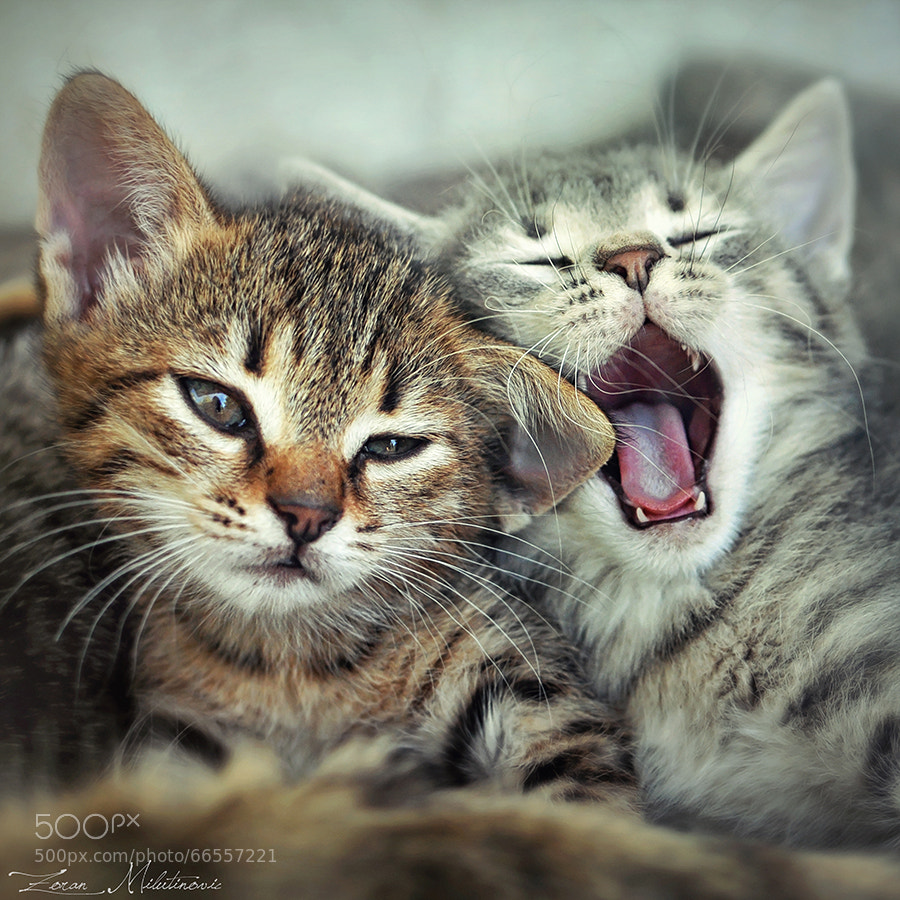 Photograph Sing for me by Zoran Milutinovic on 500px