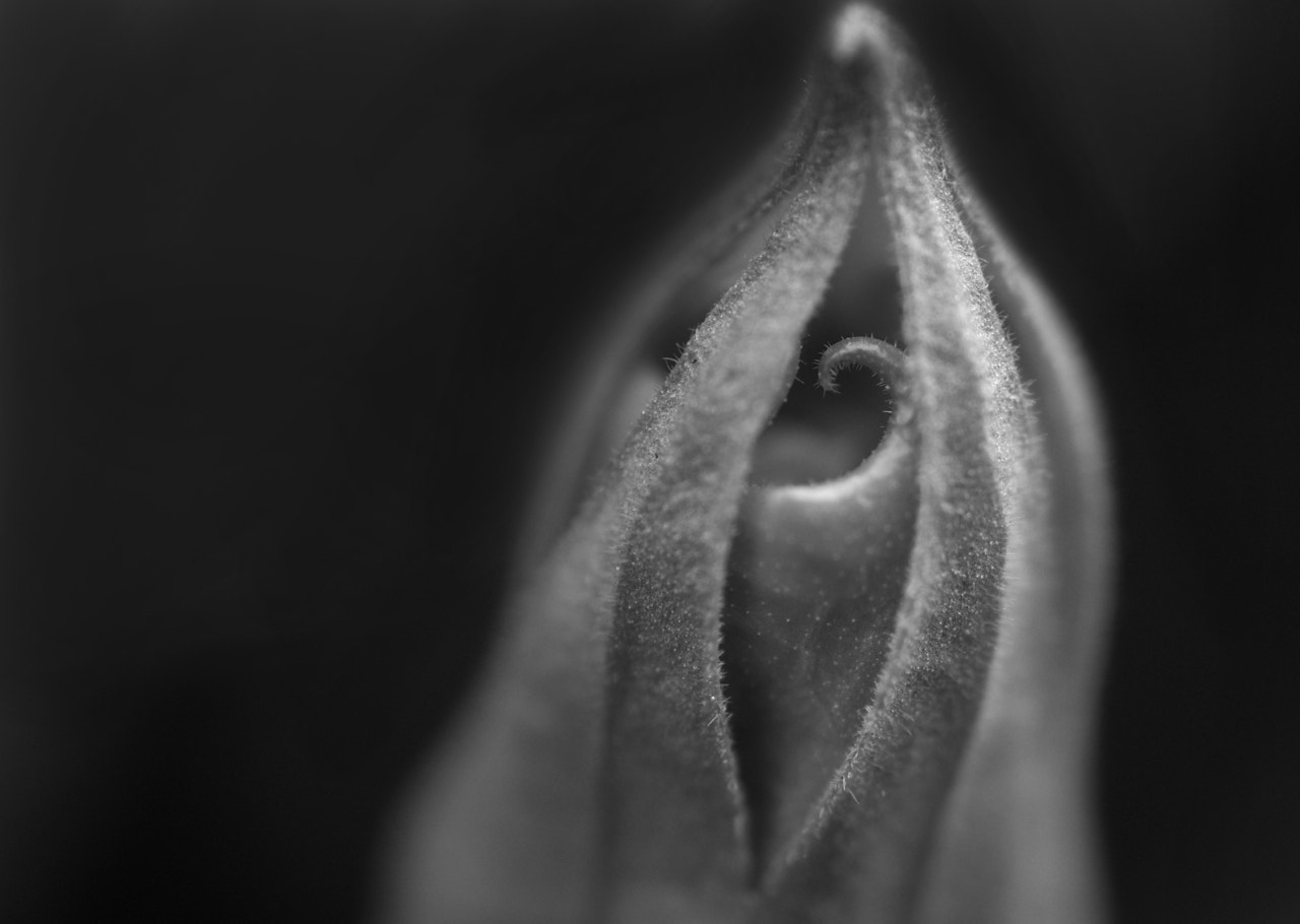 Photograph Jimson Weed bud by Francisco Marty on 500px