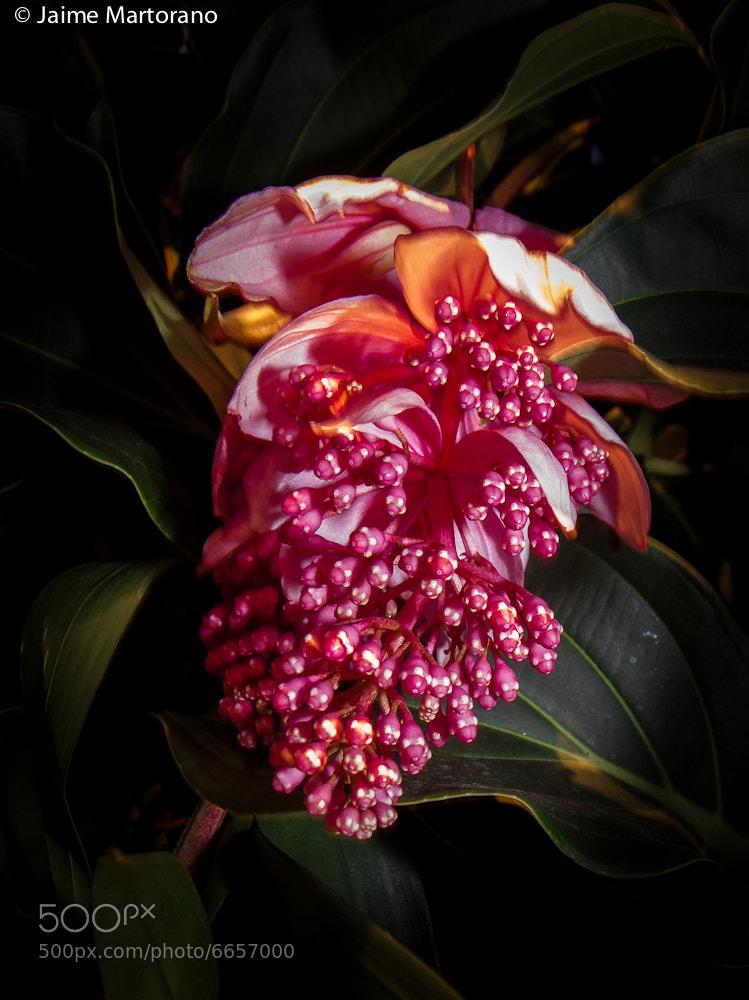Photograph NY Botanical Gardens - Orchid Show by Jaime Martorano on 500px