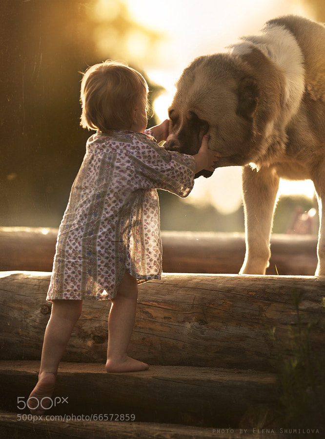 Photograph The meeting by Elena Shumilova on 500px