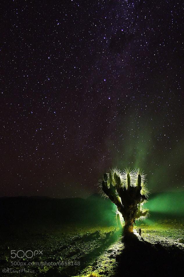 Photograph Cactus Superstar by Rodrigo Escuti on 500px
