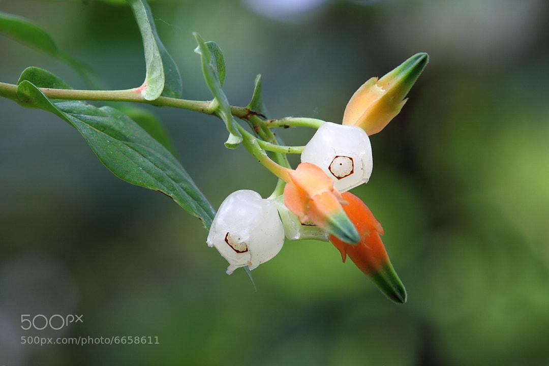 Photograph Flower by Hongcheng Wang on 500px