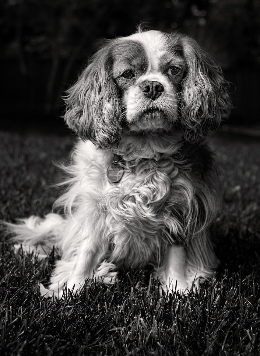 Photograph Good boy by Christopher O'Hara on 500px
