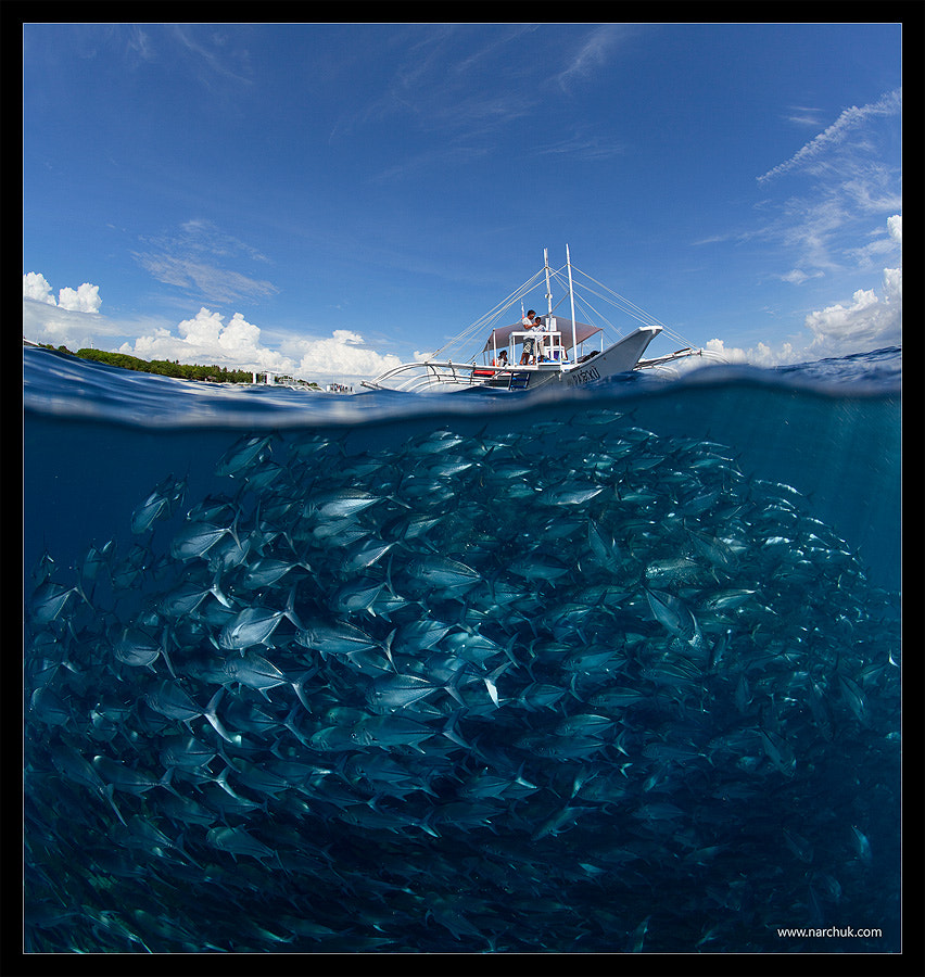 Photograph Go diving? by Andrey Narchuk on 500px