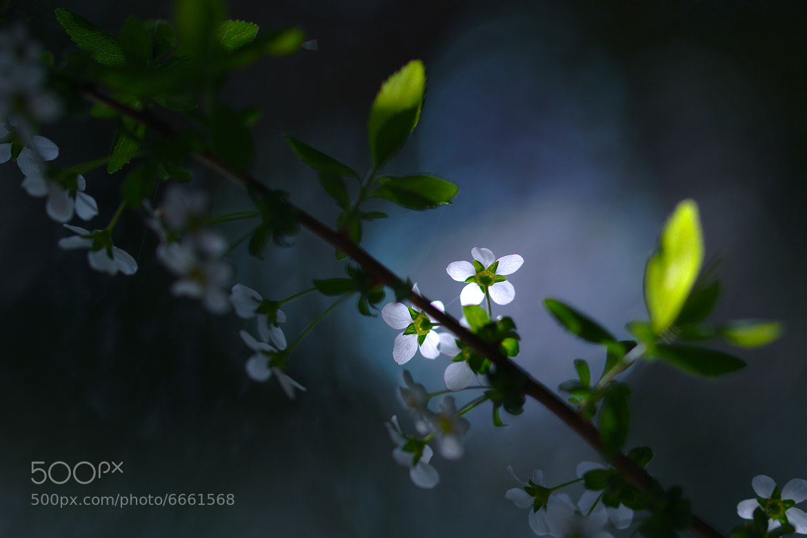 Photograph Bloom in the Light by Junya Hasegawa on 500px