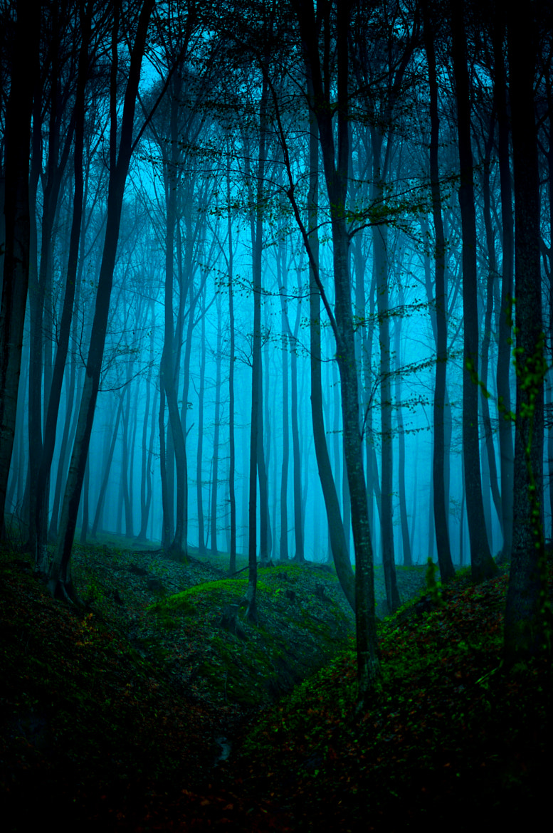 Photograph Morning in the forest by Razvan Bibire on 500px