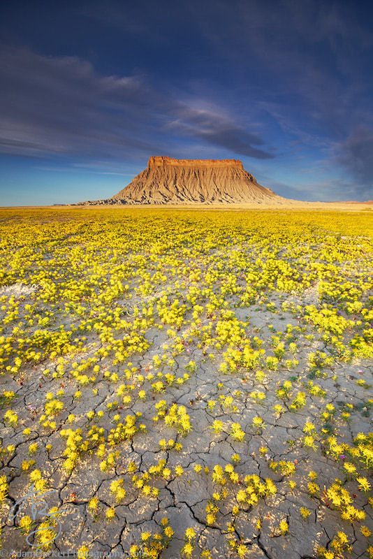Photograph Factory Butte & Beeplant by Adam Barker/AdamBarkerPhotography.com on 500px