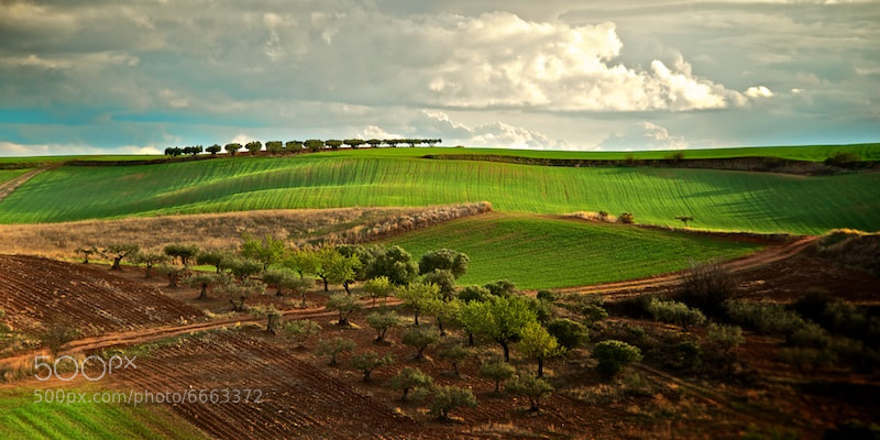 Photograph Olives & Barley by Ismael Salmerón on 500px