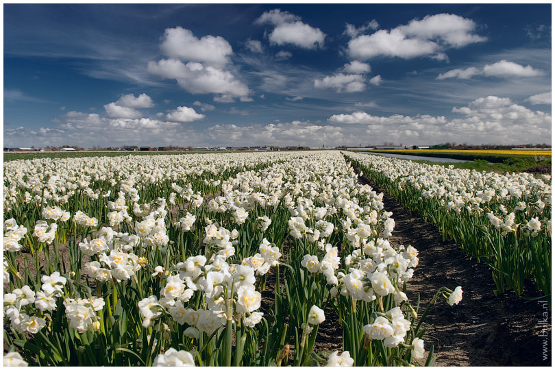Photograph Narcissus' Field by Maria Netsounski on 500px