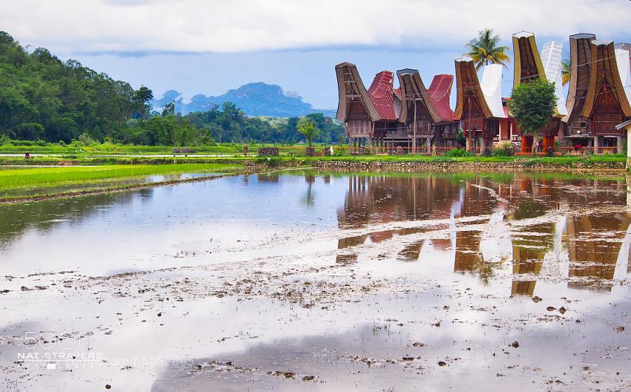 The amazing boat houses of Toraja