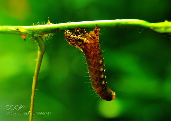 Photograph caterpillar by Eko  Pramudya on 500px