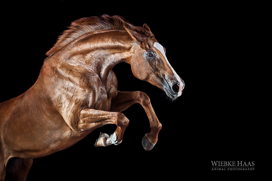 horse photography - Take-Off by Wiebke Haas on 500px.com
