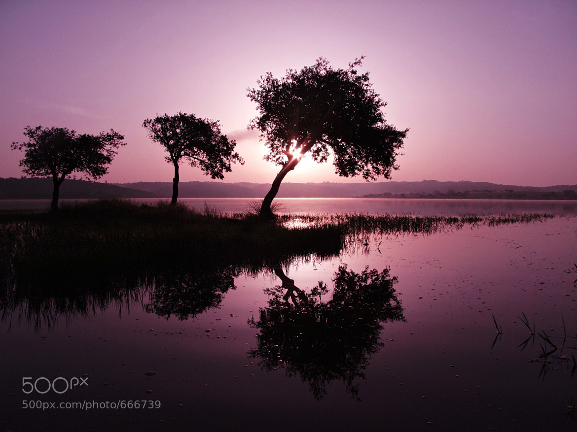 Photograph DREAM IN SHADES OF PINK by ÂNGELA  SILVA  on 500px