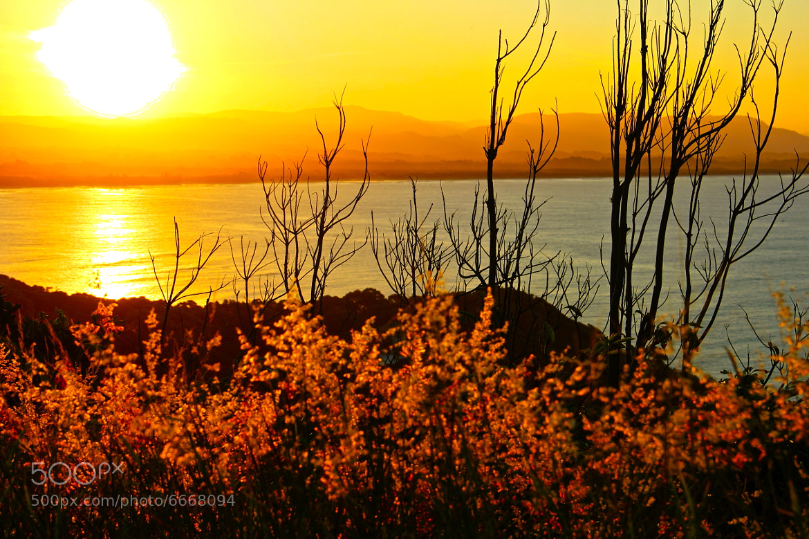 Photograph Yellowish Sunset by Sumuhan Shan on 500px