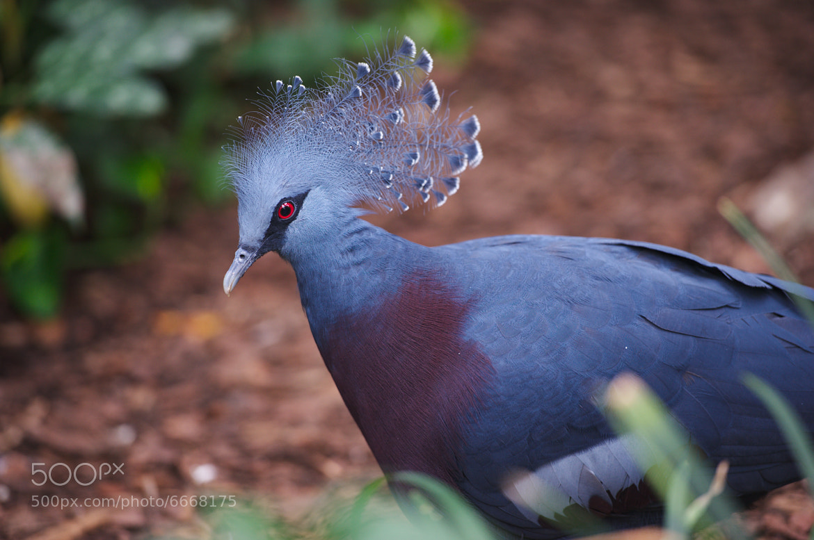 Photograph Not every Pigeon are born equal. by Eric Leblond on 500px