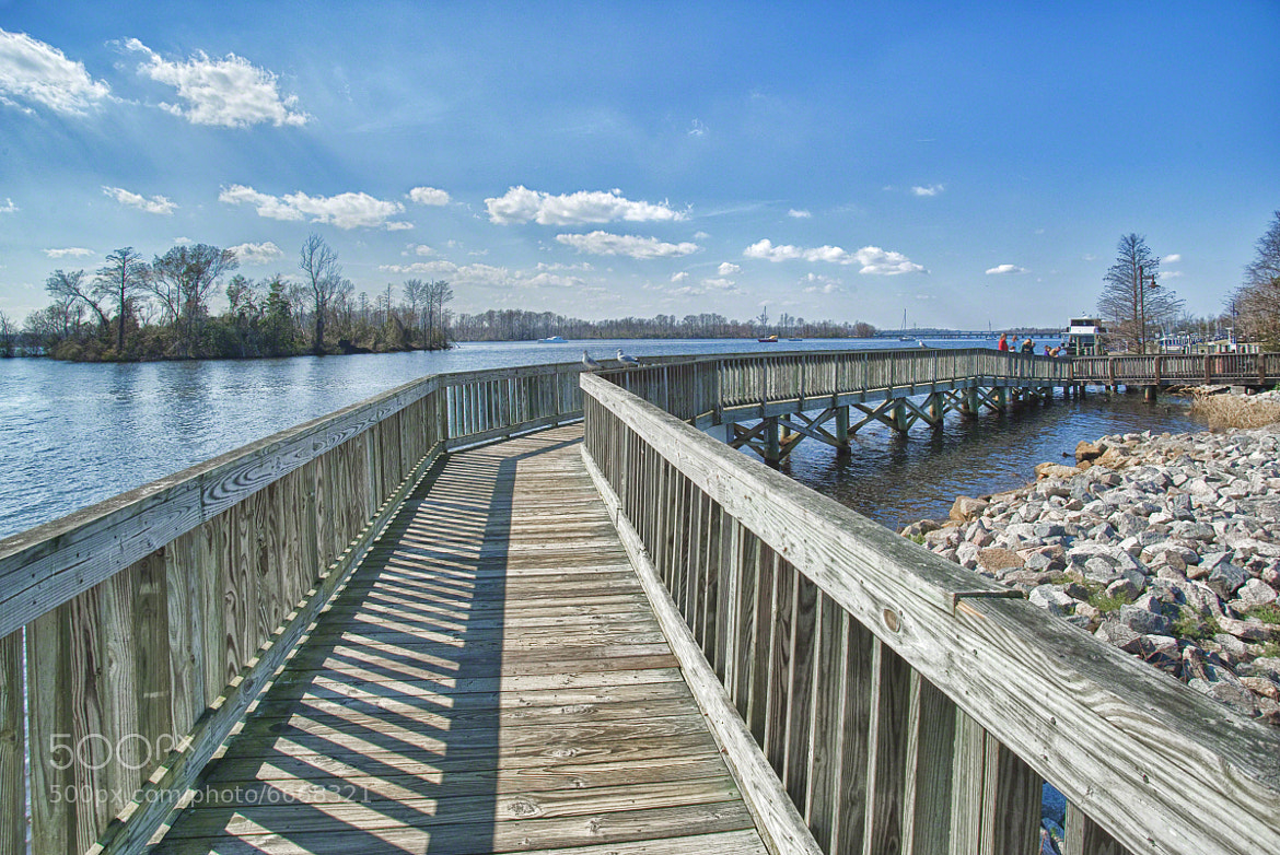 Photograph HDR - Three Gulls and a BoardWalk by Mark Neal on 500px