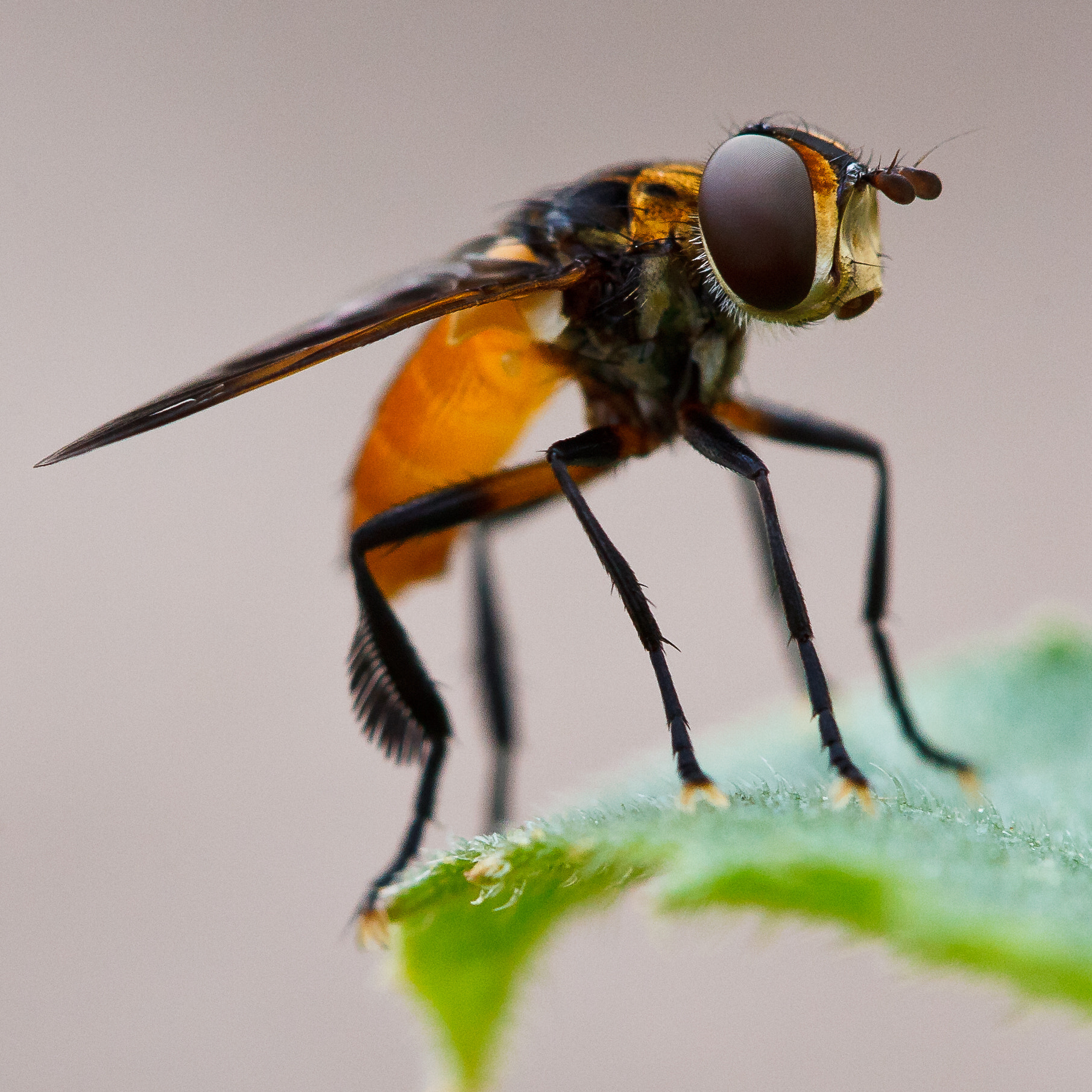 Photograph Hover Fly Macro by Jeremy Hall on 500px