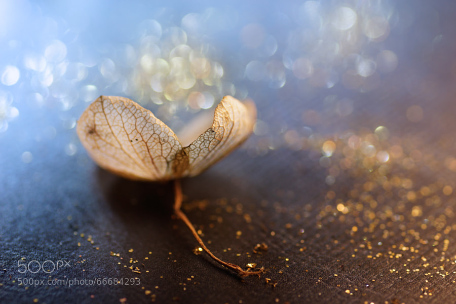 Photograph Golden Beauty by Sylvie Corriveau on 500px