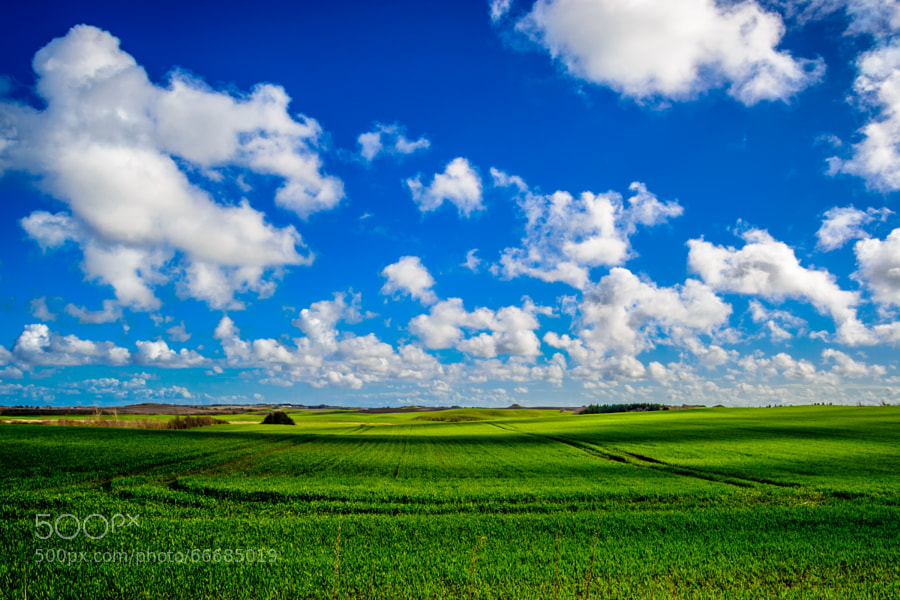 Photograph Blue sky by okdios on 500px