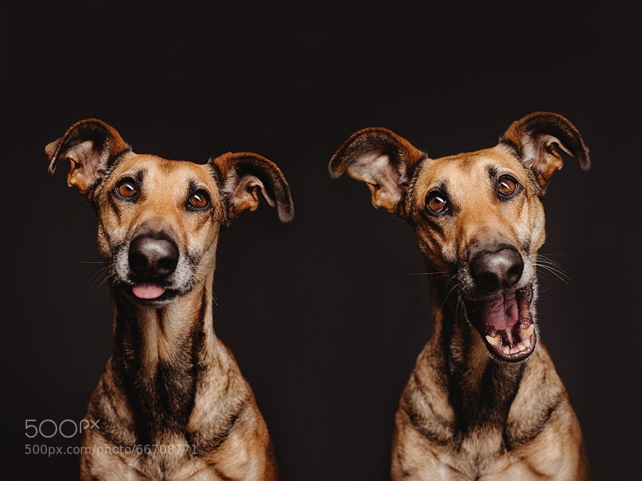 Photograph FacialExercises by Elke Vogelsang on 500px