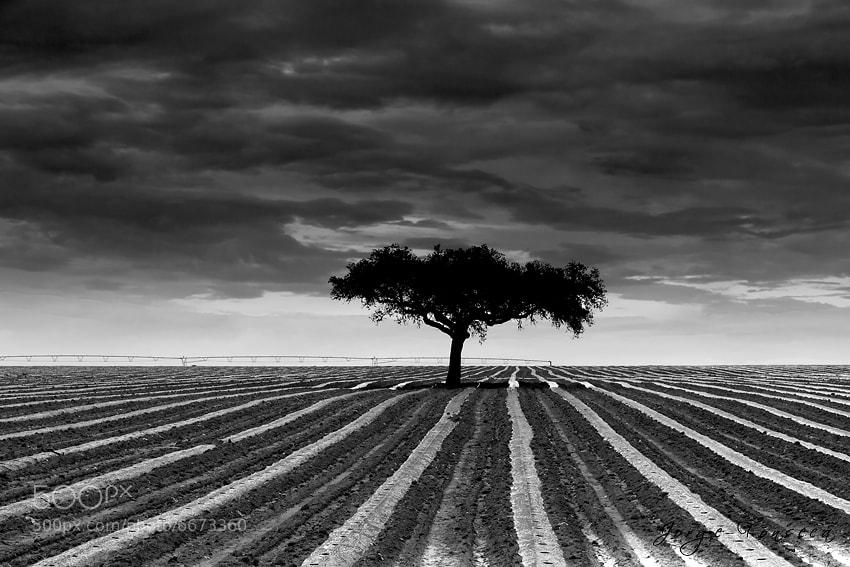Photograph Alentejo Cork by Jorge Fonseca on 500px