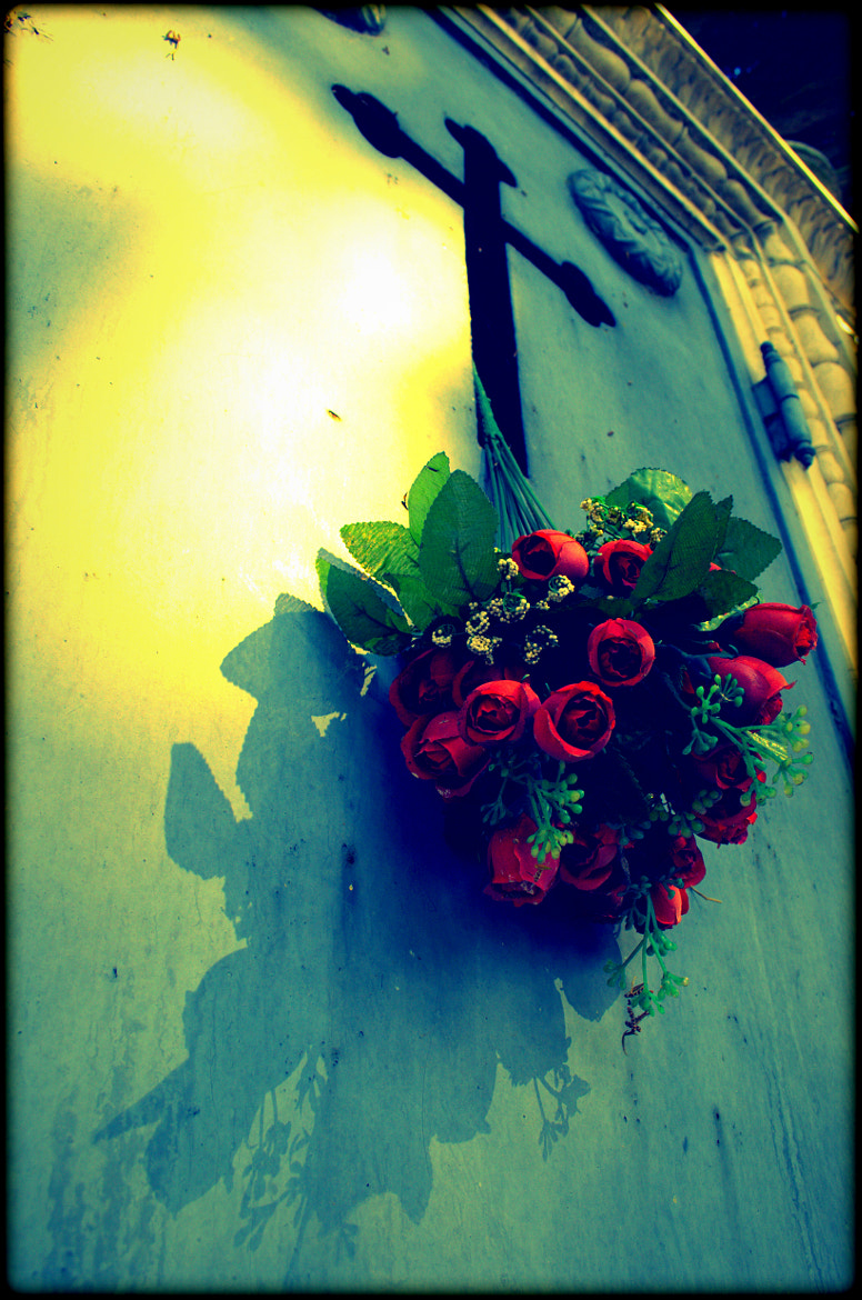 Photograph Red Roses  by Heart Explosion on 500px