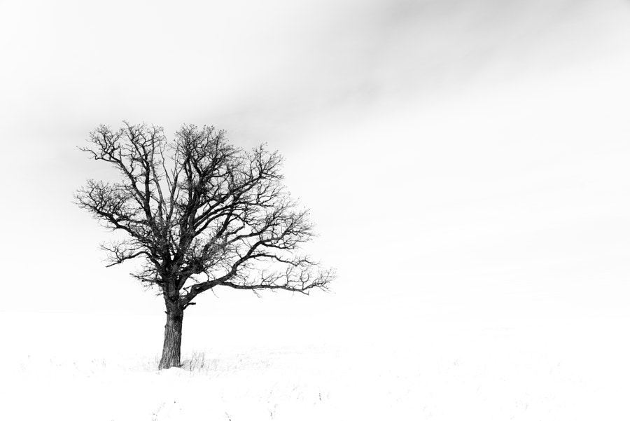 Negative Space by Nebojsa Novakovic on 500px.com